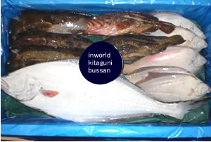 Fresh fish for overseas export